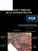 Arterias y Nervios de La Cavidad Pélvica