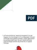 HEMODIALYSE MOURAD.pptx