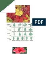 imagenes de ornografia vegetal.docx
