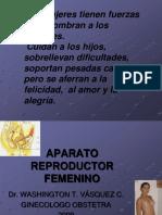 Anatomia Genital Femenina Clase 1