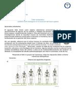taller comparativo Evolución hominidos.docx