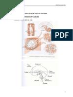 neurociencias-librito