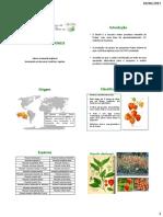 Cultura-da-Physalis.pdf