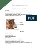 Semiología de nariz y senos paranasales