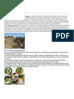 Actividades Productivas y de Servicio de Guatemala