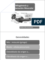 Miogenesis BIO178 2010-2 Para Alumons