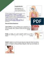 Aparato respiratorio.docx