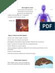 daño hepatico