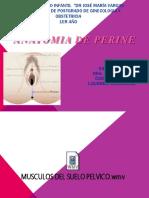 Anatomía Del Perine