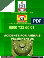 Acidentes por Animal Peçonhentos
