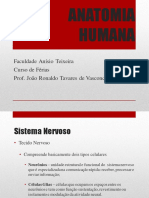 Aula-04-Anatomia Humana.pdf