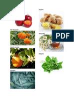 21 Plantas Medicinales Imagenes