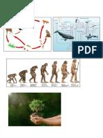Dieta variada de los homínidos primitivos.docx