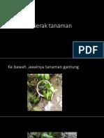Gerak tanaman.pptx