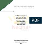 NECFRUT FINAL OFERTA Y DEMANDA (2).docx