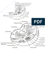 Celula animal y vegetal 1.docx