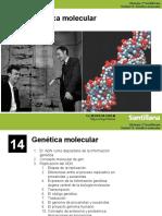 ADN (ETAPAS).pdf
