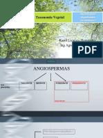 CLASE 14 Angiospermas I feb 2019.pdf