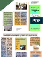 folleto saul.pub FINAL.pdf