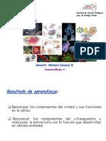 clase citosol y citoesqueleto.pdf