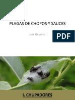 Plagas de Chopos y Sauces