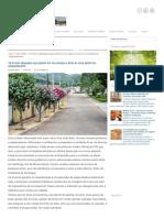 14 árvores adequadas para plantio em vias urbanas e dicas de como plantá-las adequadamente ~ Eco Vida - Bom Despacho