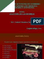 Anatomia Hembra bovino