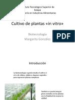 1.2.5 Cultivo de Plantas «in Vitro»