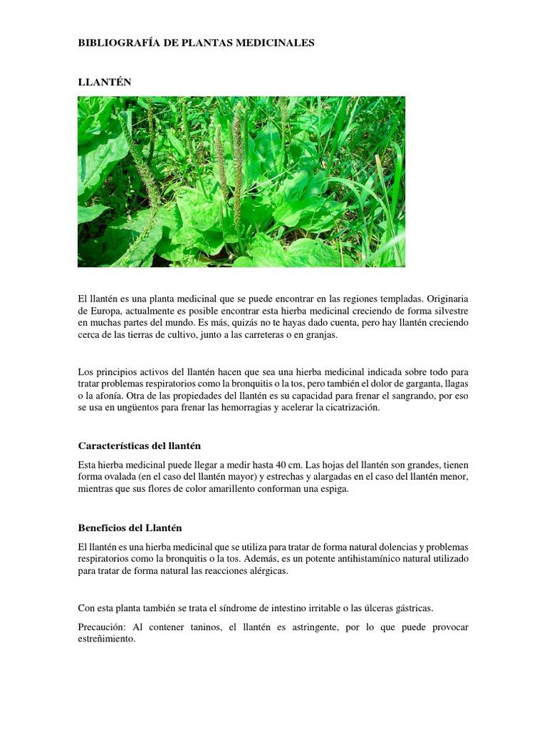 origen del llanten planta medicinal