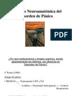 Neuroanatomia Del Panico