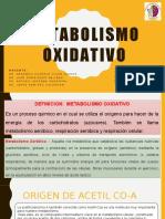 METABOLISMO-OXIDATIVO.pptx