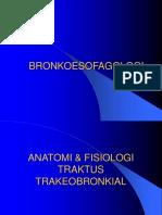 anatomi bronkus