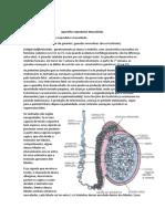 Aparelho Reprodutor Masculindo Aula 1 Embrio.pdf