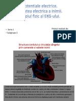 Activitatea electrică a inimii
