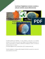 Conoce a Penicillium Digitatum