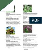 PLANTAS MEDICINALES-2019