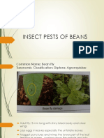 INSECT PESTS OF BEANS.pdf