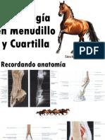 Radiología en Menudillo y Cuartilla.