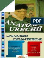 8. ANATOMIA URECHII.ppt