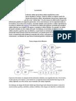 La Meiosis y la mitosis.docx