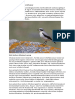 Bird of the Month, May, Wheatear