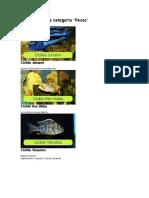 categoria peces.docx
