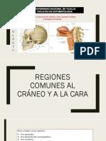 Regiones Comunes Al Craneo y Cara Grupo 3