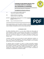 INFORME-PITTER-N°5  ultimo