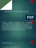 CAMELIDOS SUDAMERICANOS