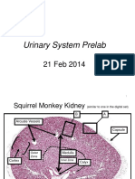 21+Feb+ROTHWELL_Urinary+Prelab_CPR2014a