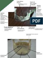1-MODELOS OSTEOLOGIA..pptx