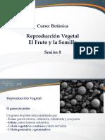 Organos Reproductivos - El Fruto y La Semilla