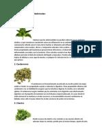 10 Tipos de Plantas Medicinales