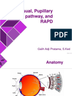 Visual, Papillary Pathway, And RAPD